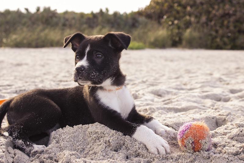 Hund am Strand beim Urlaub mit Hund in Cuxhaven