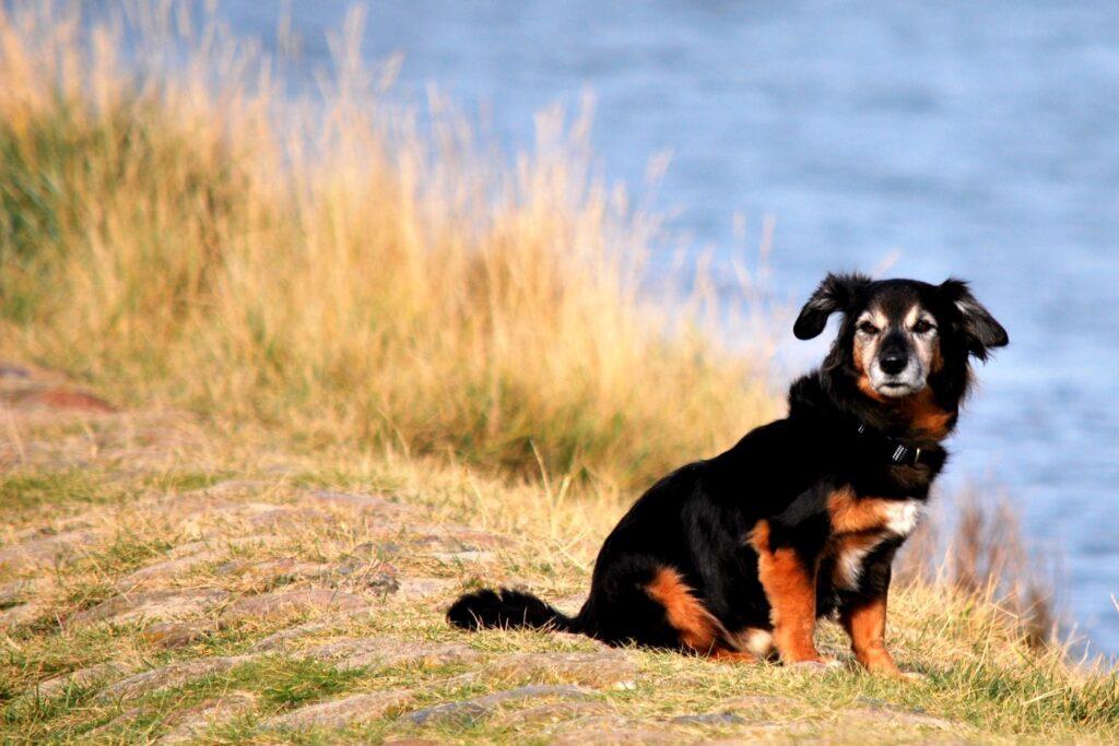 Urlaub mit Hund in Cuxhaven